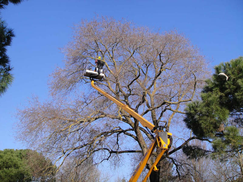 abbattimento-alberi-forli